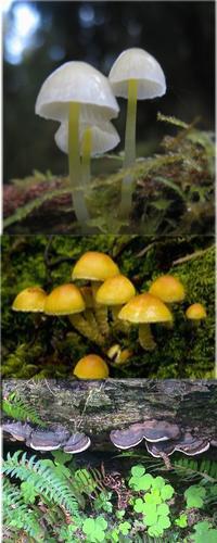 fungi composit